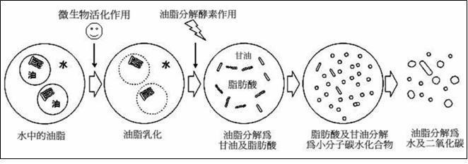 培菌過程示意圖